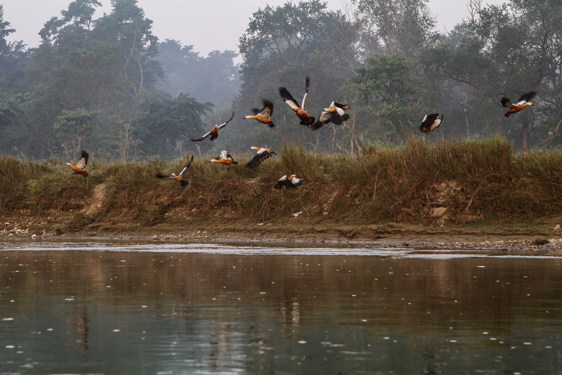 Bird watching, Bird Watching in Chitwan National Park, Jungle Safari, Chitwan Jungle Safari