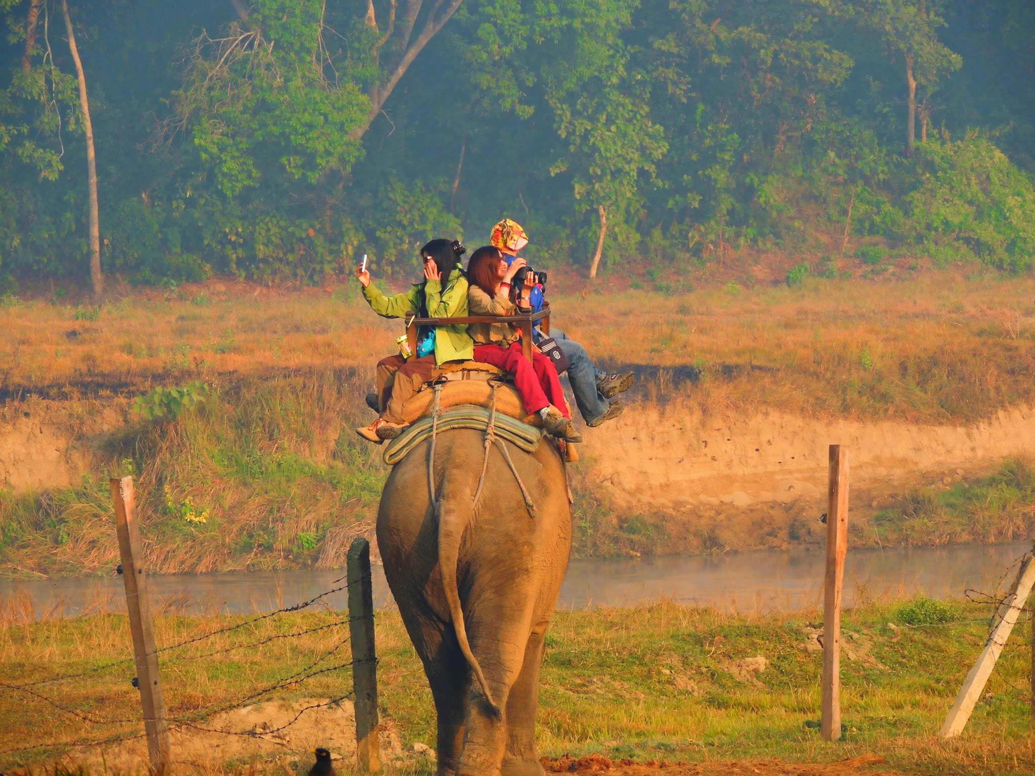 Chitwan Jungle Safari, Elephant Safari, Chitwan Jungle Safari, Elephant Safari in Chitwan National Park, Chitwan National Park, Elephant Riding