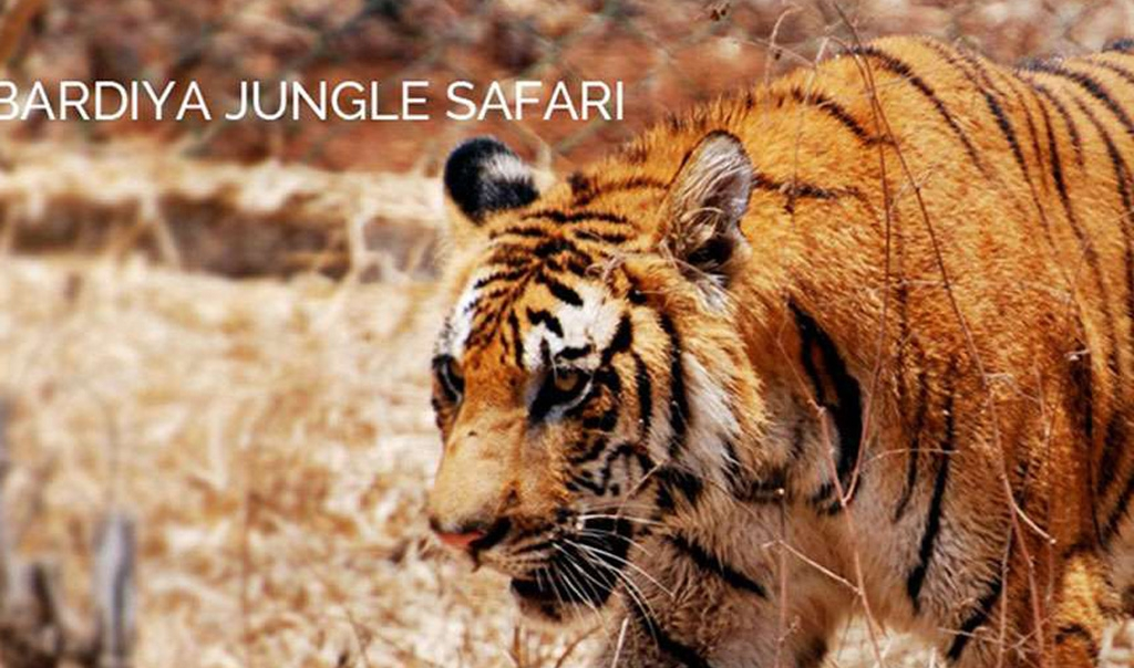 Bardia National Park Jungle Safari